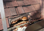 Squirrel damaged roof